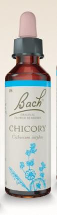 Chicory - Floral de Bach