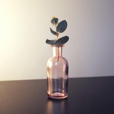 Kari Plant Support 🌵