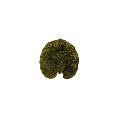 Travessa folha Alquemila 18cm, RIVIERA, forêts