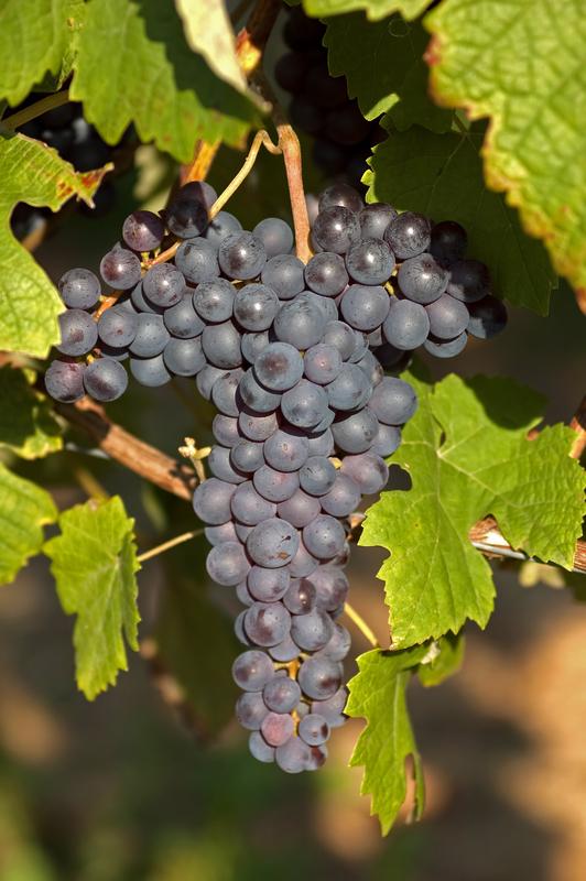 Vinhos DOC Douro