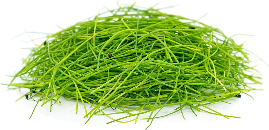 Micro Vegetal Cebolinho 30gr