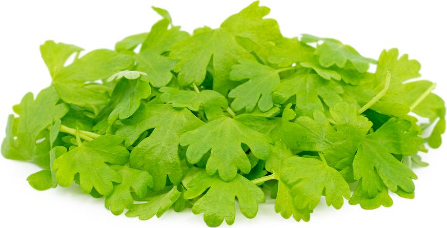 Micro Vegetal Aipo 30gr