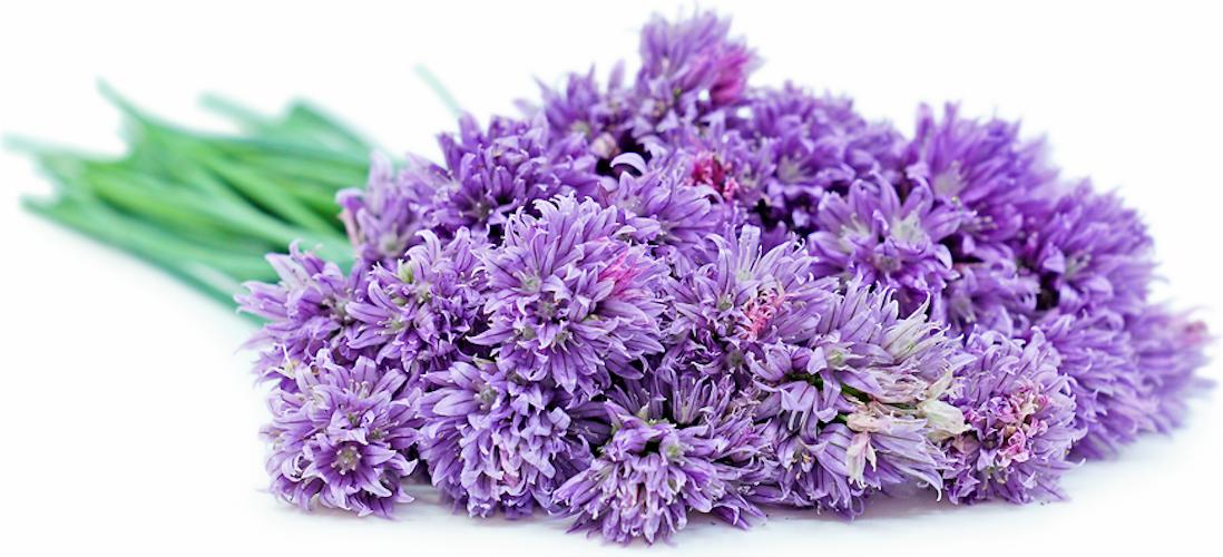 Flor de Cebolinho 30 unidades