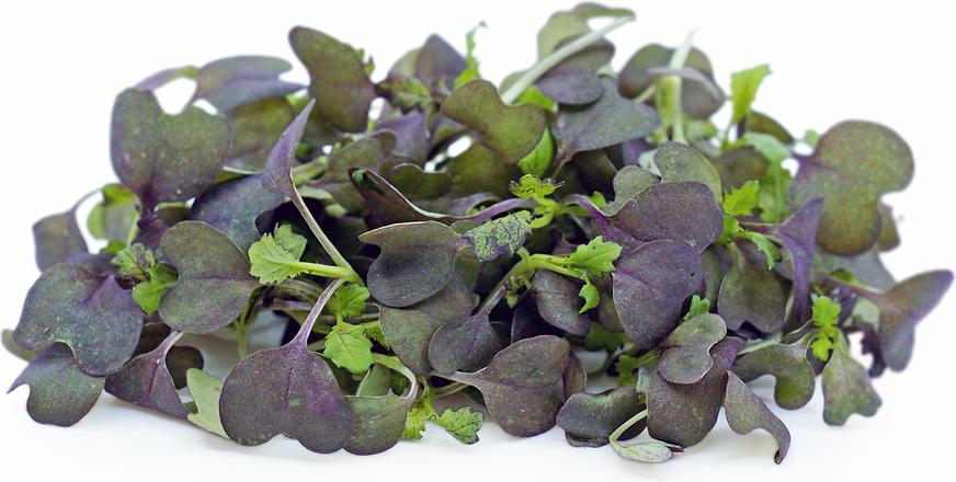 Micro Vegetal Mostarda Vermelha 30gr