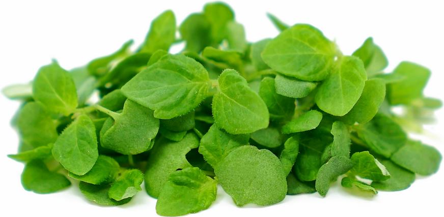 Micro Vegetal Shiso 30gr