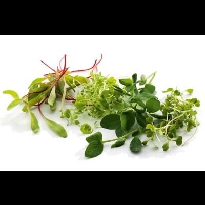 Micro Vegetais