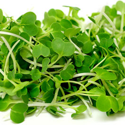 Micro Vegetal Pak Choi 30gr