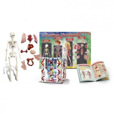 Kit de corpo humano