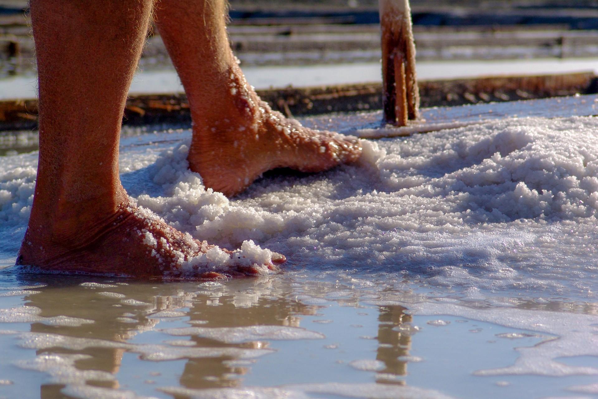 Pés de Marnoto numa marinha de sal