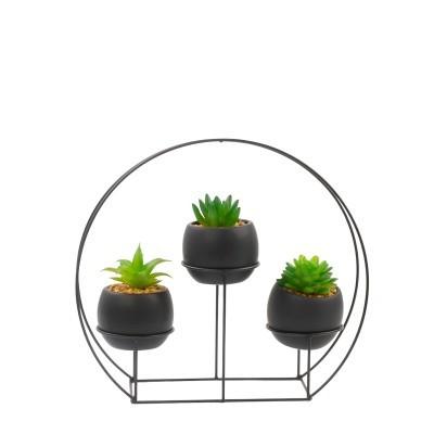 Suculentas x3 vasos com suporte