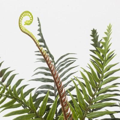 Planta feto imperial com vaso